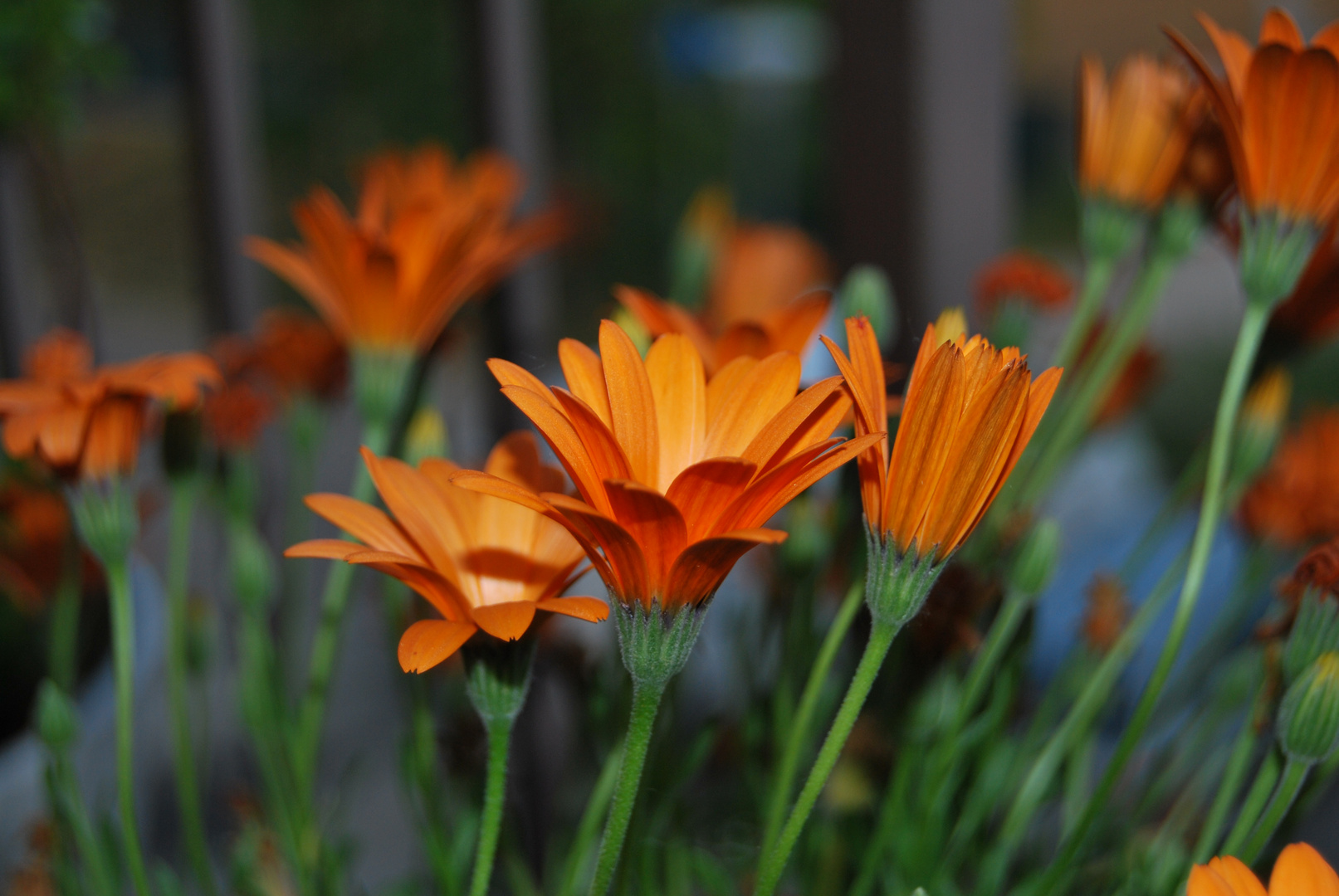 orange flower's