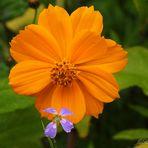 Orange-Gelb....