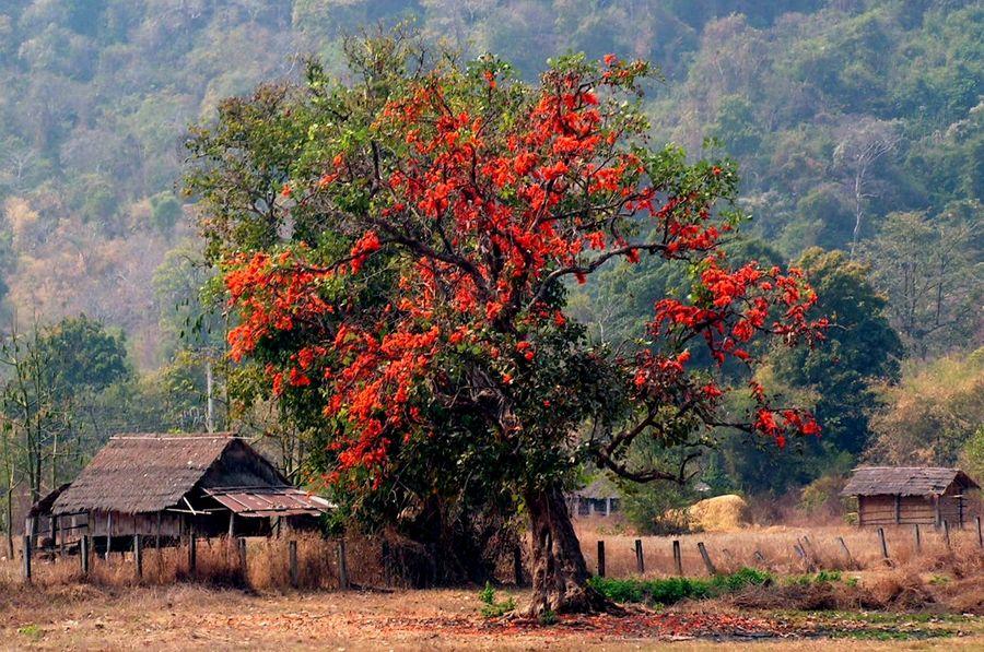 Orange gesehen am Wat Phou