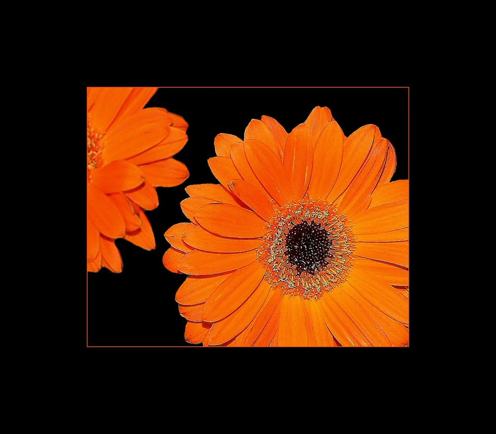.orange. II