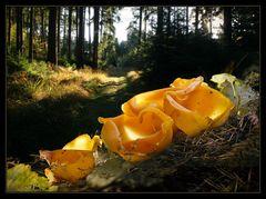 Orange im Sonnenschein