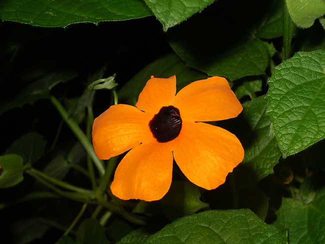 Orange mit schwarzem Tupf