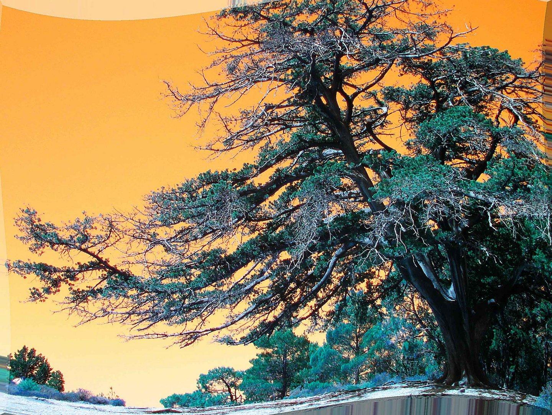 orange Mystik