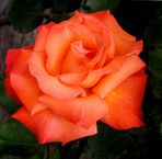 Orange R.