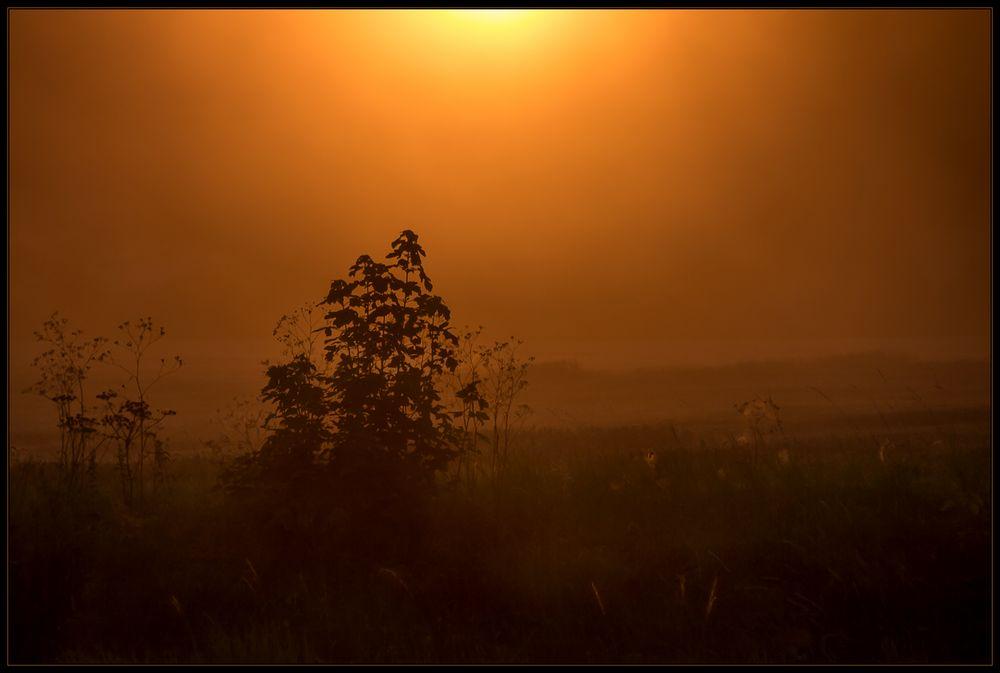 Orange Sonnenglut im Spelzenstaub... - Expression der Sommerhitze...