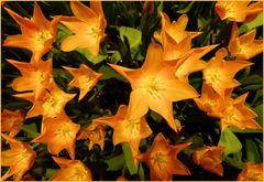 orange Sternexplosion