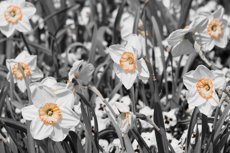 Orange & Weiß II