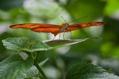 orangegreen...