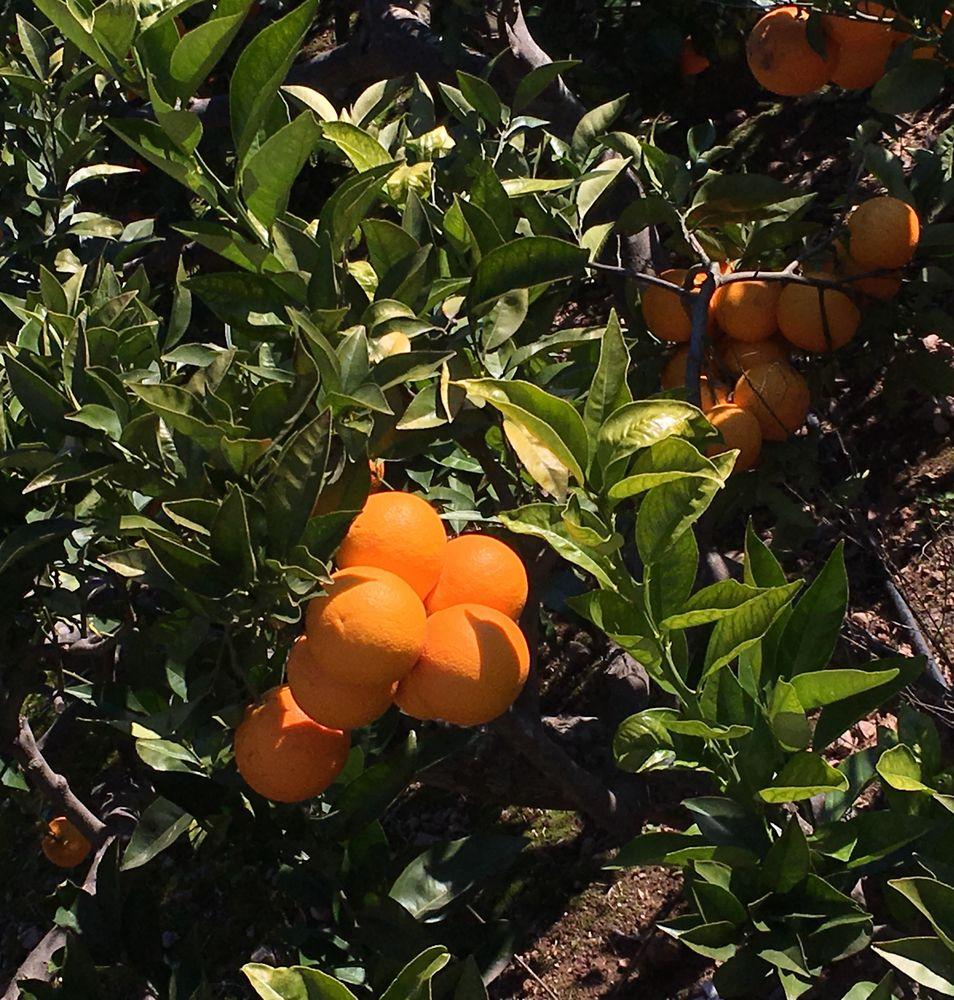 Orangen am Straßenrand ;-)