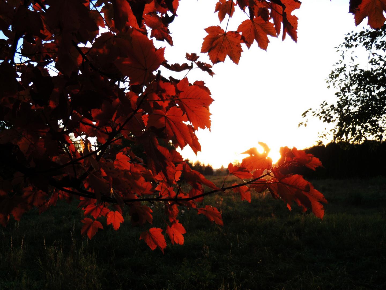 orangen Blätter!