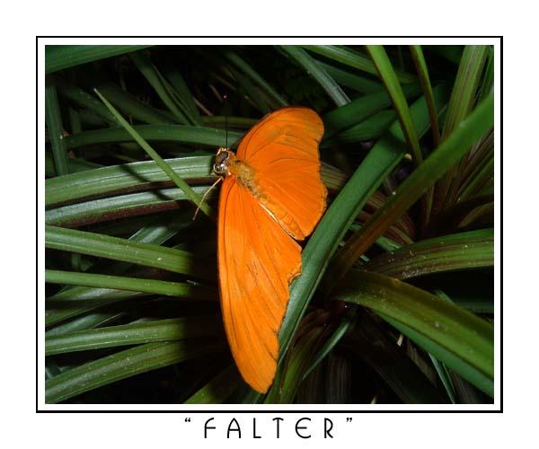 """Orangen"" -Falter"