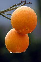 Orangen im November...
