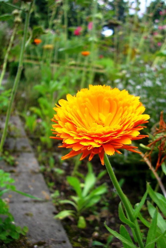 Orangene Blüte