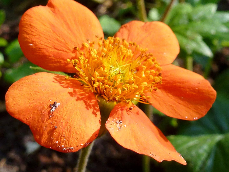 orangene Blüte makro