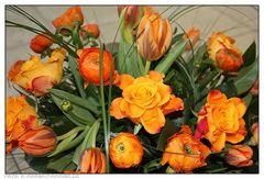 Orangene Rosen