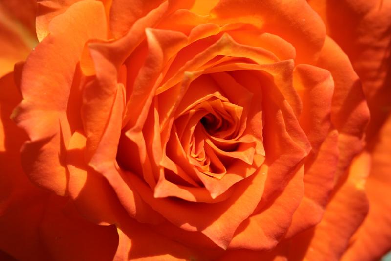 Oranger Traum