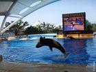 Orca Show im Loro Parque