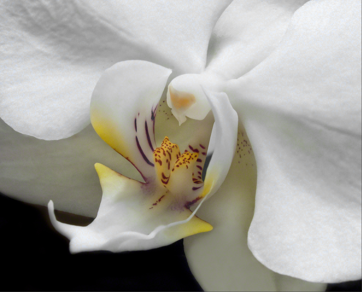 Orchid - Abstract Detail
