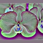 - Orchid glow -