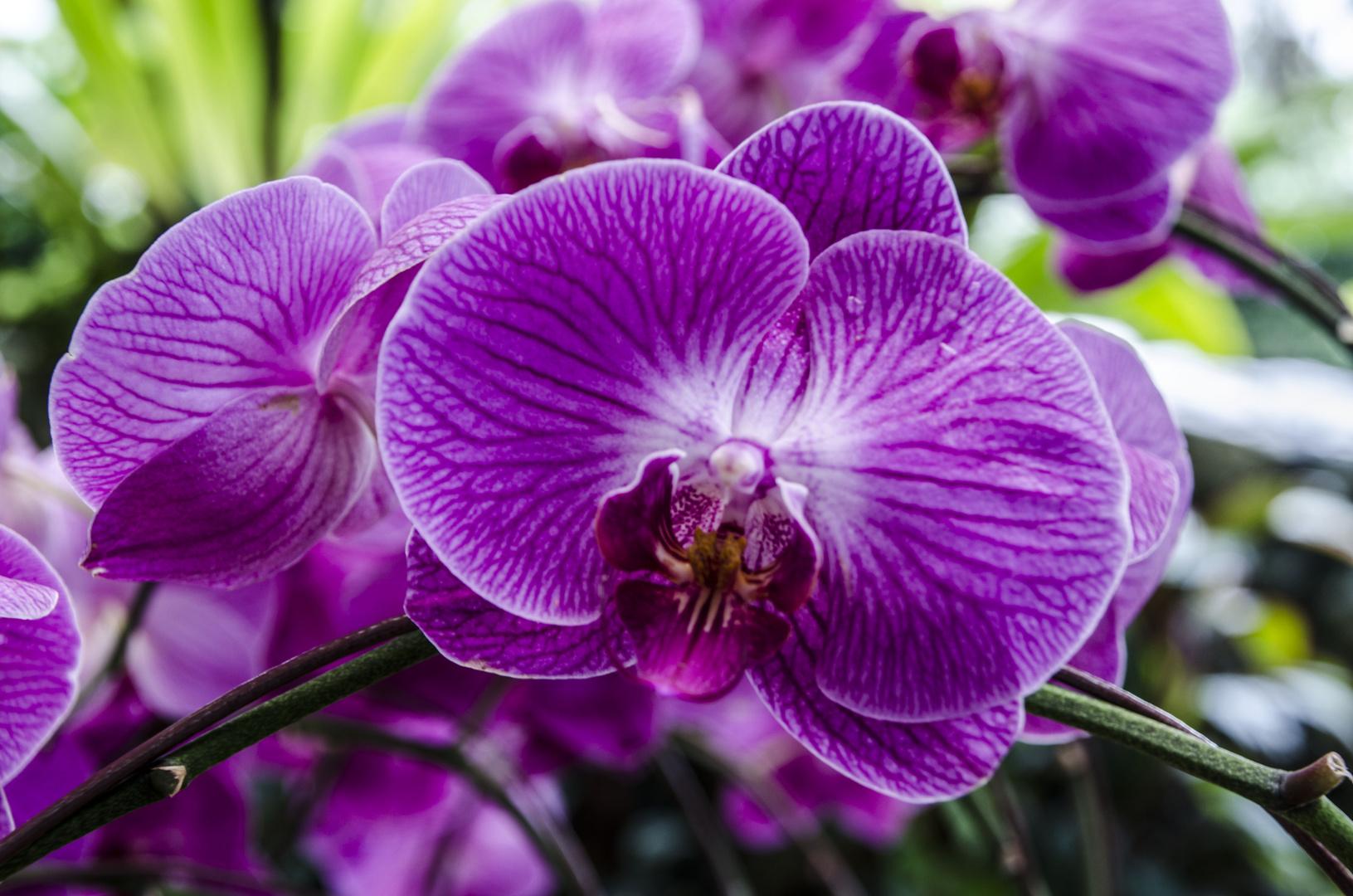Orchid Park 2