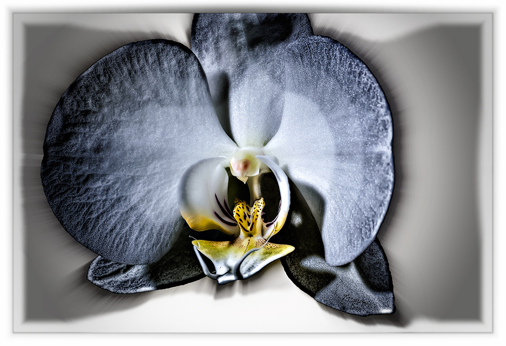 Orchid Stoned