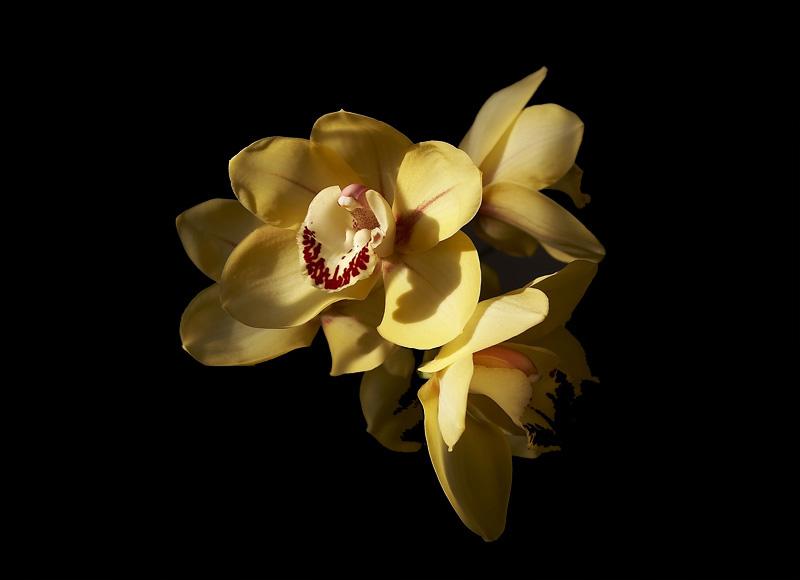 orchidea nella notte...