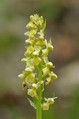 Orchidee 1/2010 (Blasses Knabenkraut)