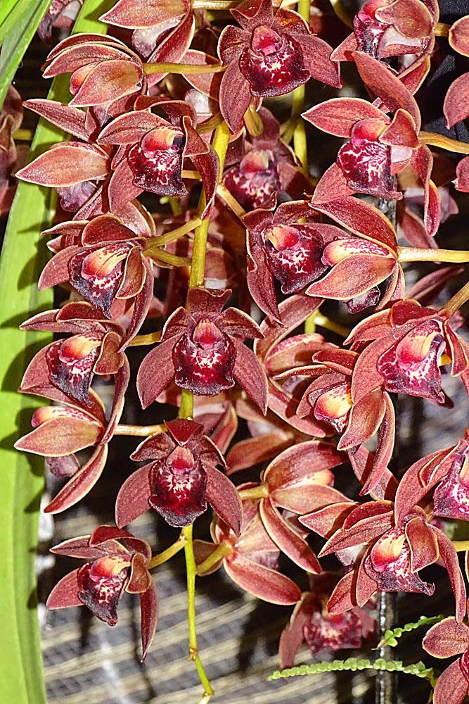Orchidee 18