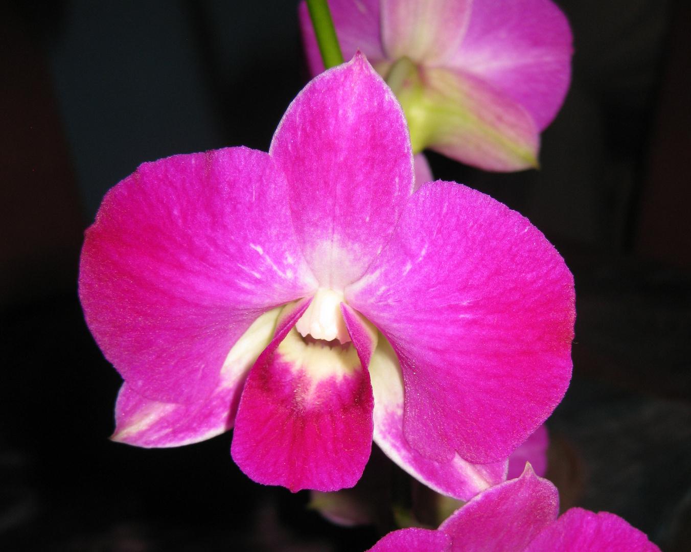 Orchidee, 19.11.2011