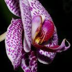 ...Orchidee 2
