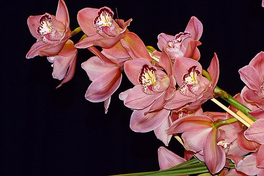 Orchidee 23