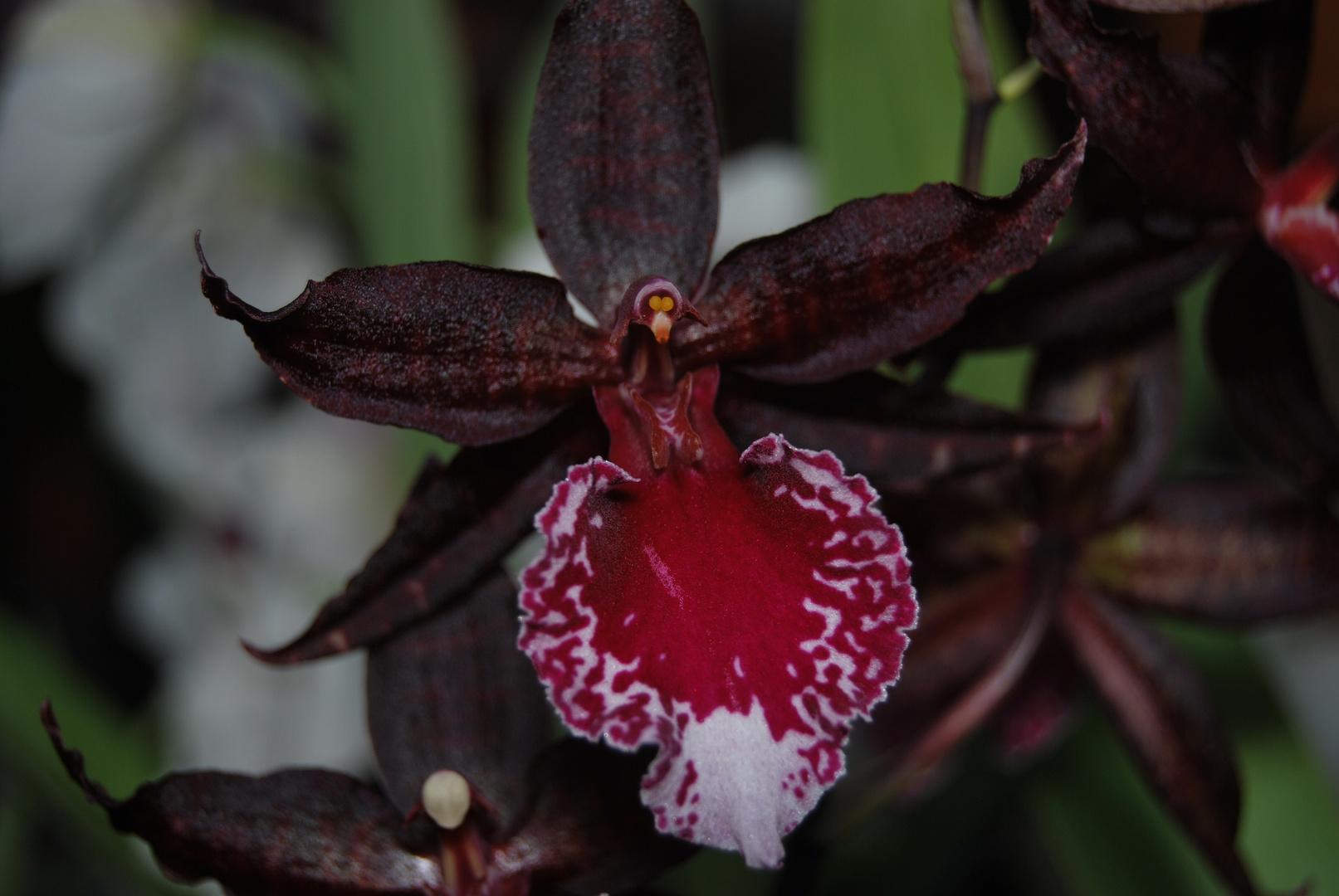 Orchidee # 4