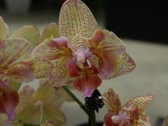 Orchidée 4