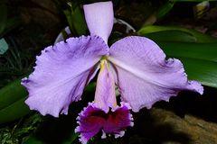 Orchidee-46