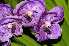 Orchidee-49