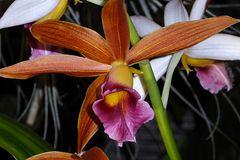 Orchidee 5