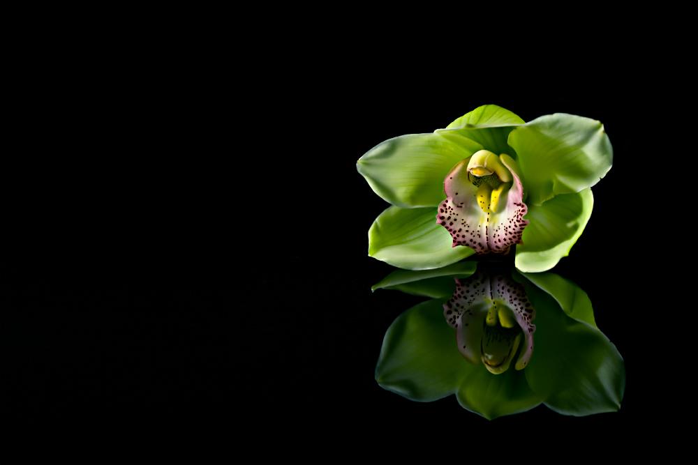 >Orchidee<
