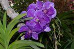 Orchidee???