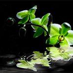 Orchidee am Wasser