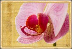 Orchidee auf Papyrus