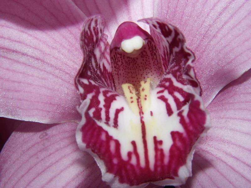 Orchidee aus nächster Nähe