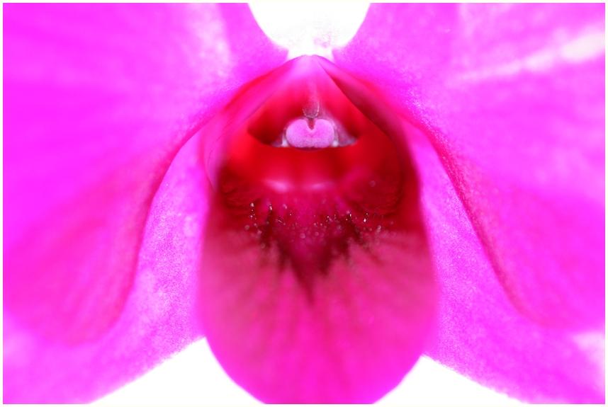 Orchidee B