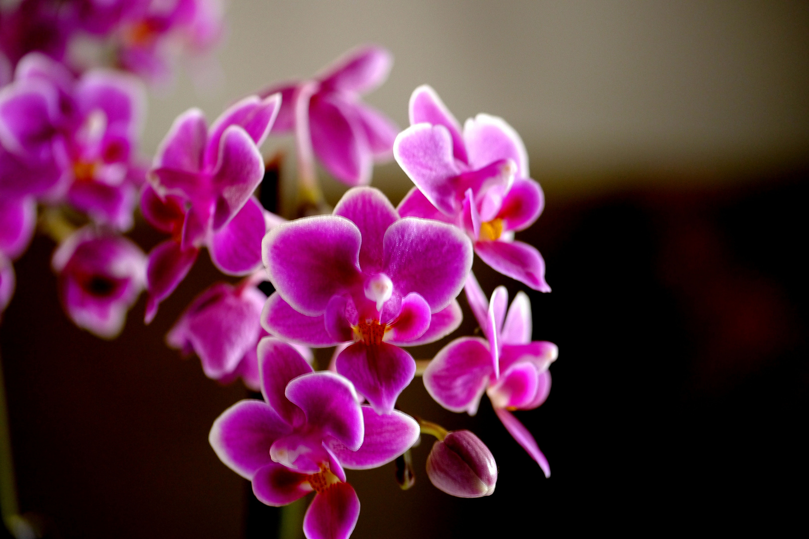 Orchidee bei.........