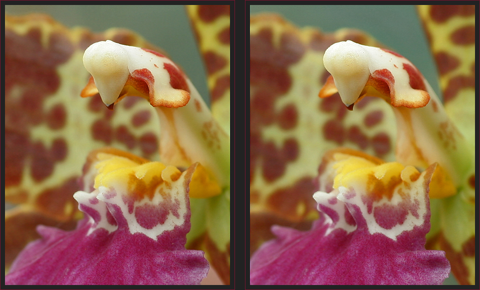 Orchidee Detail [3D]