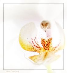 Orchidee einmal anders.....