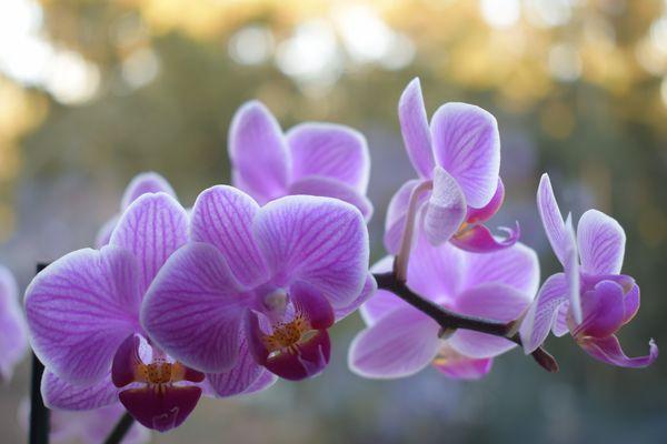 weisse orchideen fotos bilder auf fotocommunity. Black Bedroom Furniture Sets. Home Design Ideas