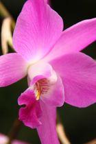 Orchidee ganz nah