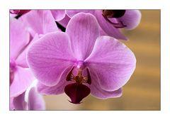 Orchidee im Abendlicht