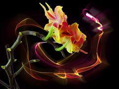 Orchidee in Flammen