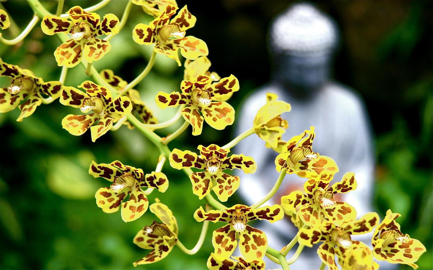 Orchidée jaune tigrée